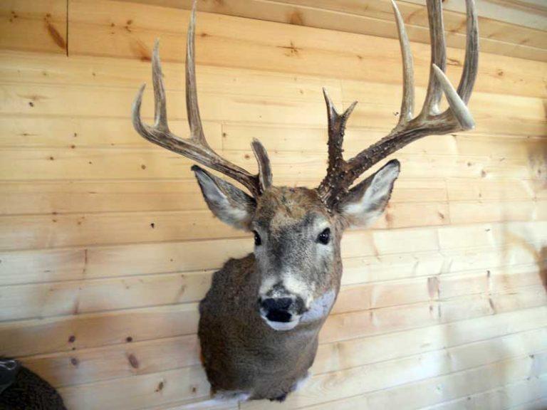 buck-mount (1)