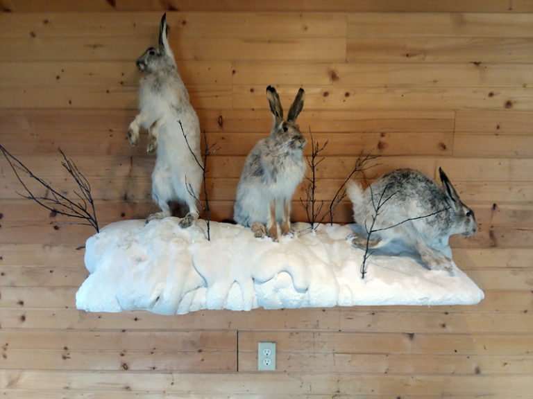 snowshoe-hares